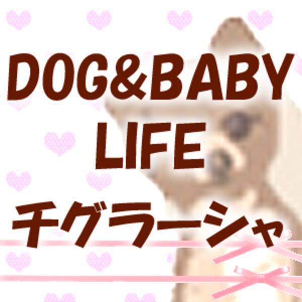 DOG&BABY LIFE  チグラーシャ